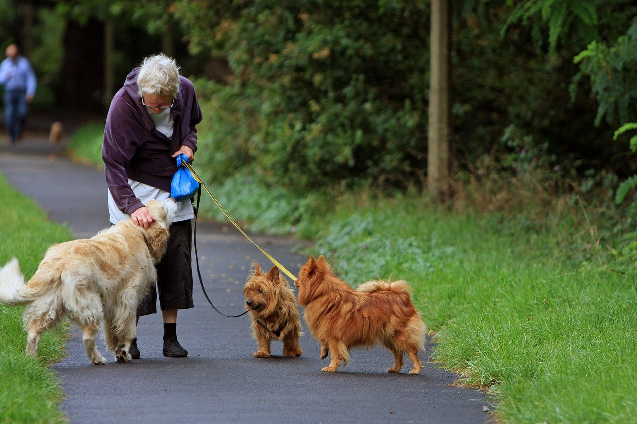 an older woman out walking her 3 dogs